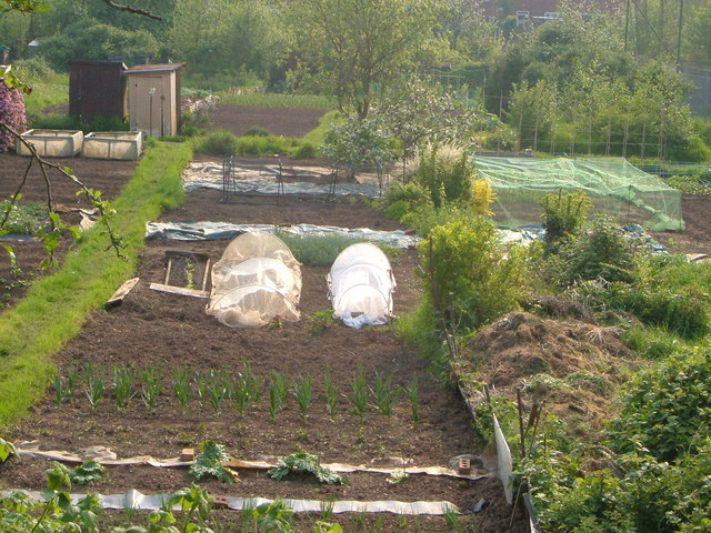 Allotments at the Guys Hylton site, Exeter