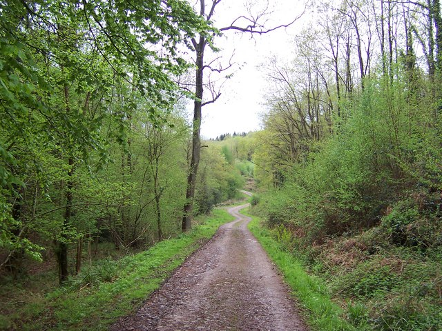 Offa's Dyke Path in King's Wood