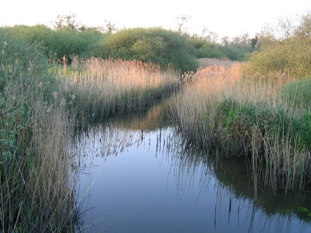 Fen Channel, Wheatfen Nature Reserve