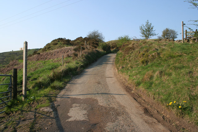 Country lane at Dun Cow's Grove