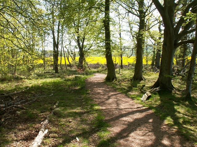 Magus Muir Millennium woodland