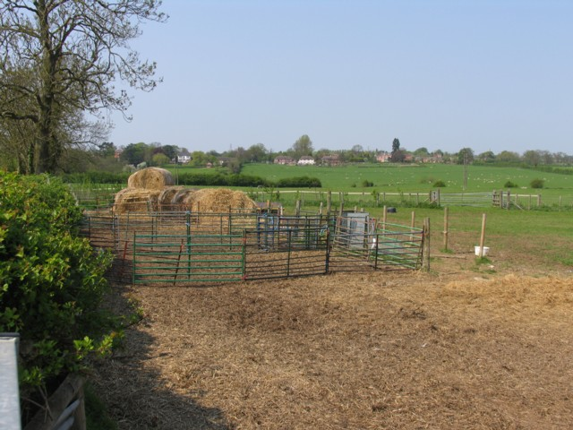Temporary sheep pen