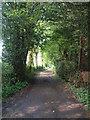 SP9204 : Ashotts Lane, Chartridge by Rob Farrow