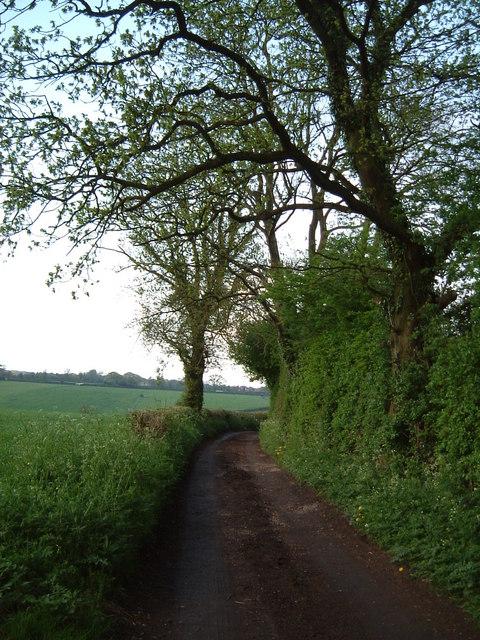 Trees on Ashotts Lane
