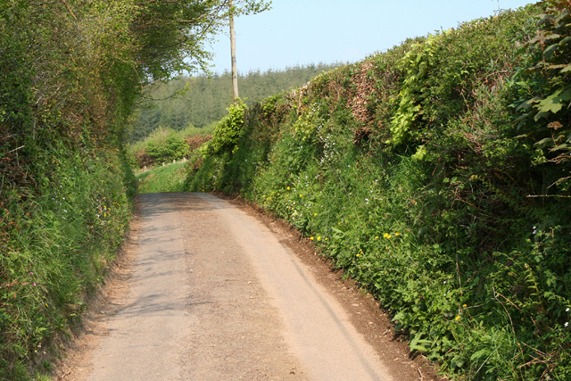 Chipstable: lane at Raddington Bottom