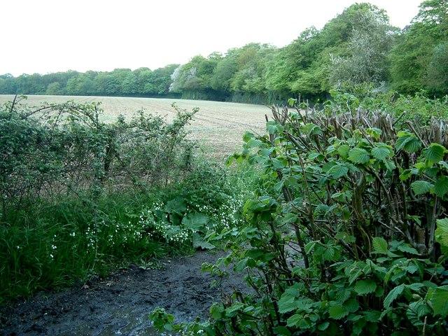 Field, Wood & Bridleway