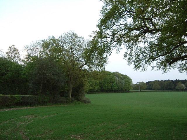 Fields near The Lee