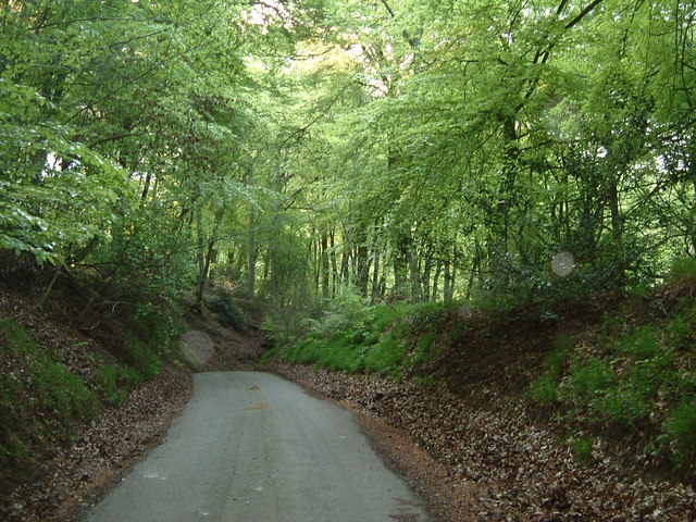 Northill Wood, near The Crong