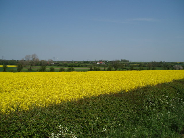 Field of Rape, near Egmanton, Nottinghamshire