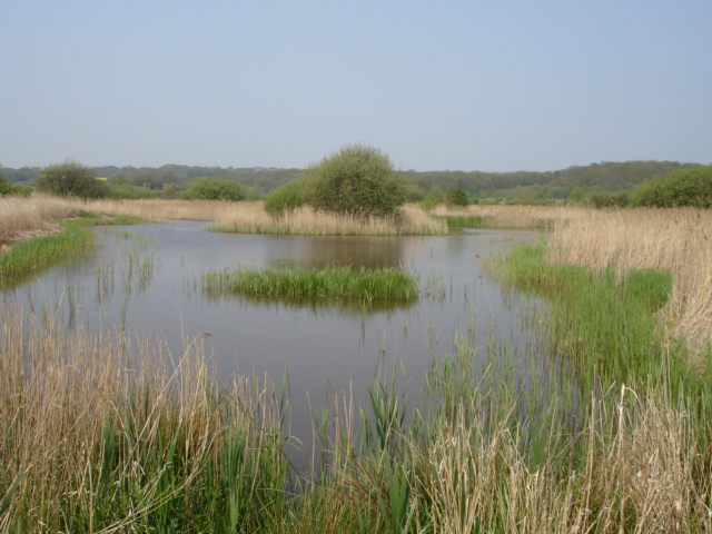 Nature Reserve Nr Bulverhythe East Sussex