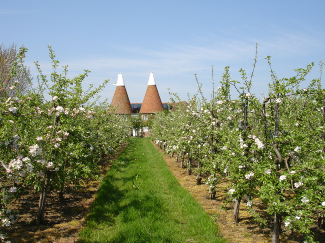 Orchard Icklesham East Sussex
