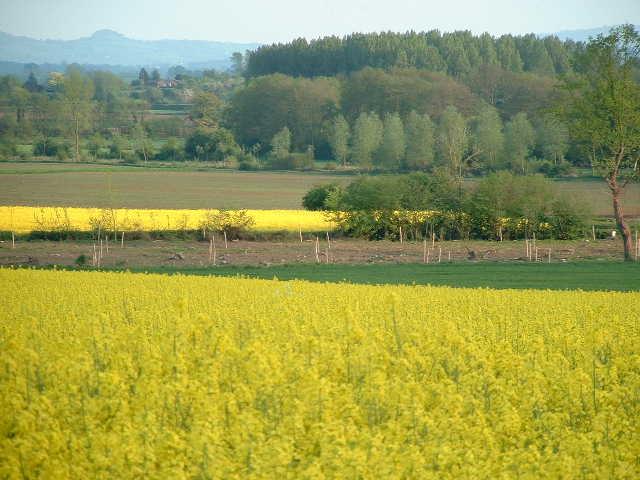 Fields near Mansel Lacy