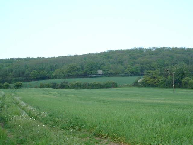Merryhill Wood