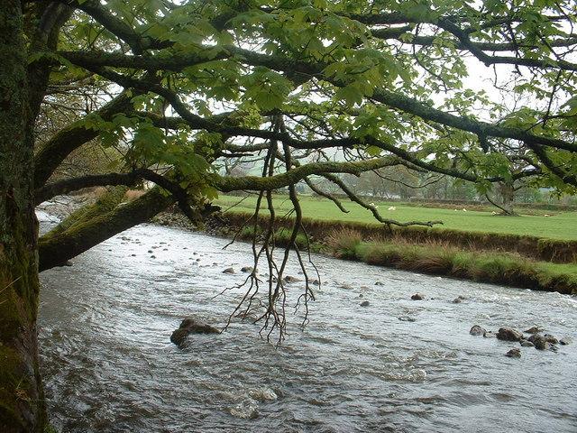 Afon Lliw, near Llanuwchllyn