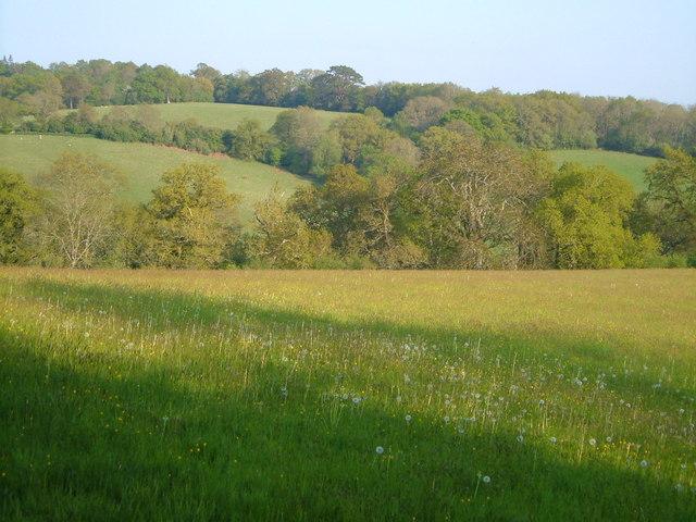 View near Kingsford Lodge