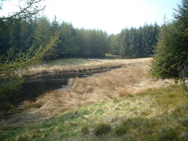 Peat pond in Heathland forest