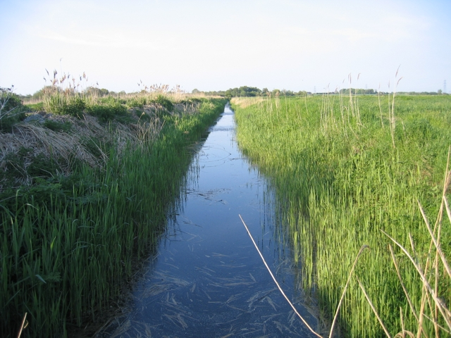 Drainer's Ditch, Little Fen, Burwell, Cambs