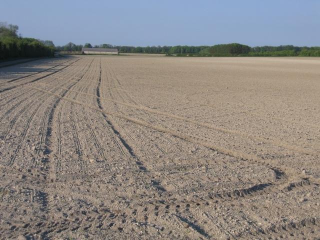 Farmland west of Exning, Suffolk