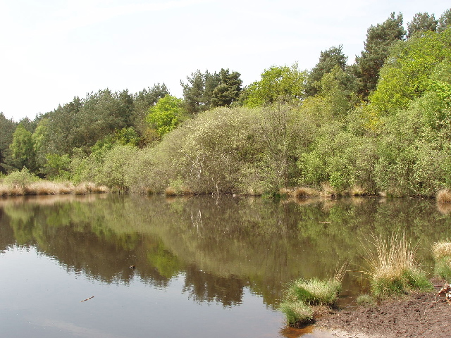 Danewell Pond on Horsell Common