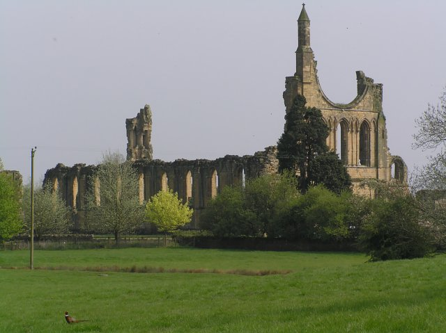 Byland Abbey From the North West