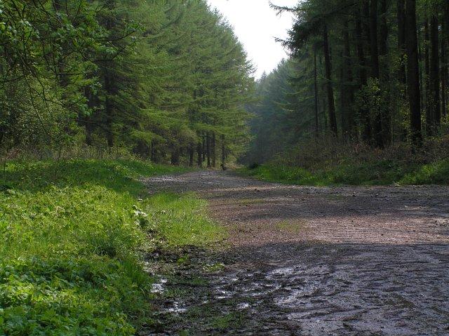 Forest track near Wass bank