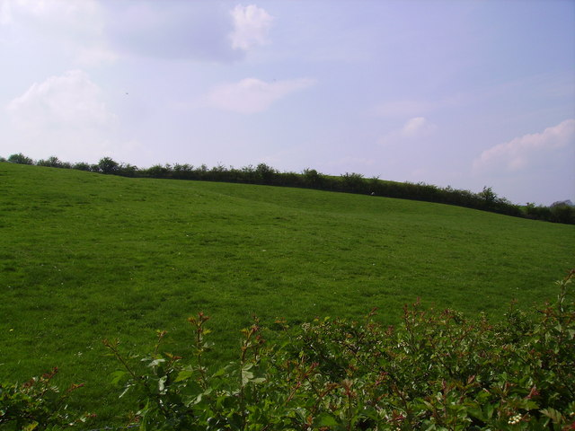 Field and Hedge