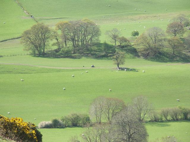 Farmer checking his sheep at Tyn-y-graig