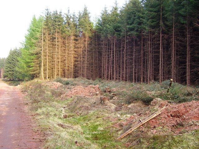Woodmuir Plantation