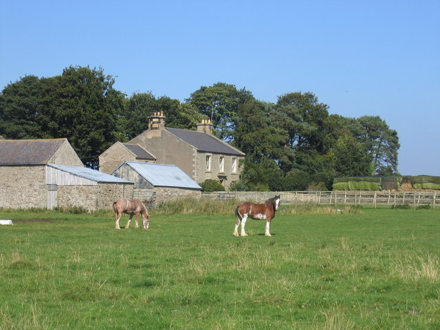 Sillywrea Farm