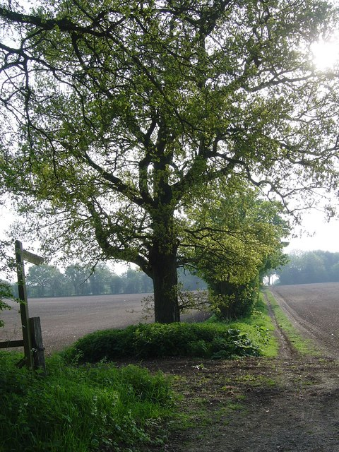 Footpath to South Warnborough