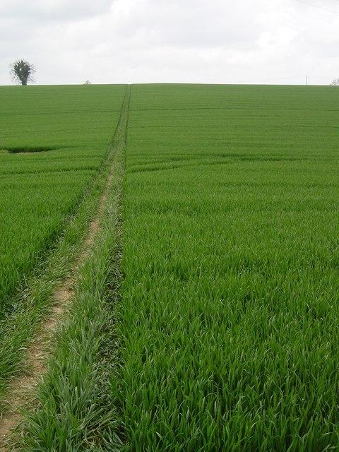 Downland scene near Weston Patrick