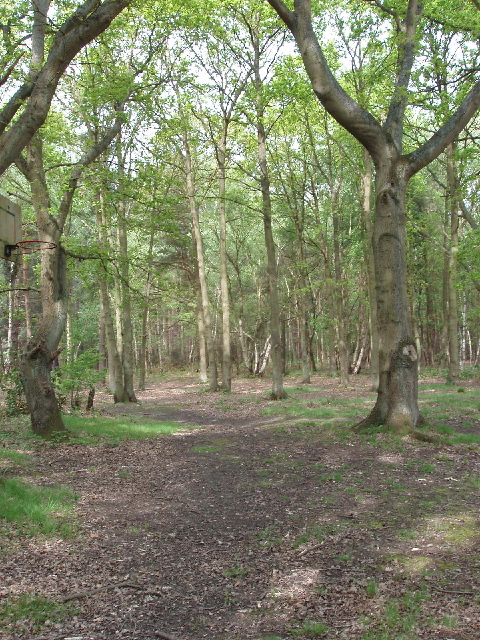 Horsell Common woodland