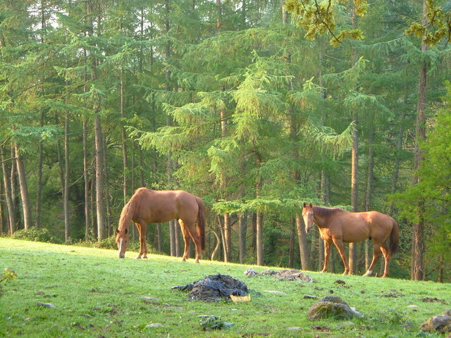 Horses at Bilberryhill