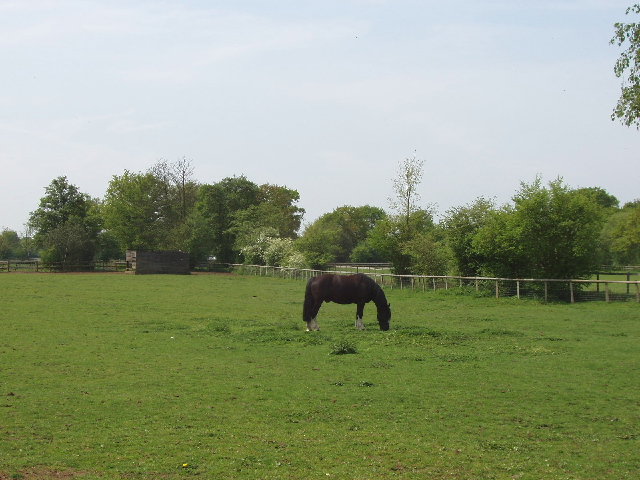 Horse paddock, by Fairoaks airport, Woking