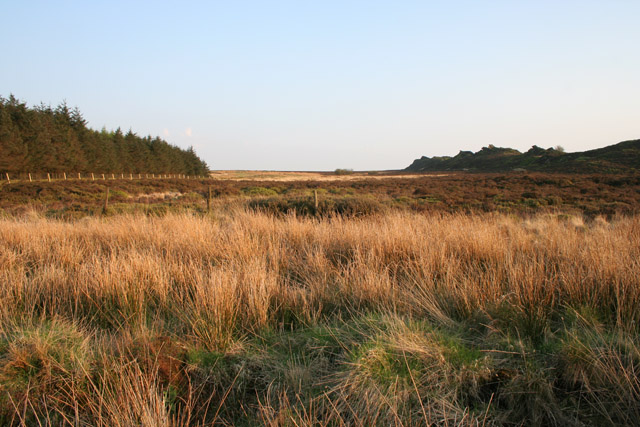 Black Brook Nature Reserve