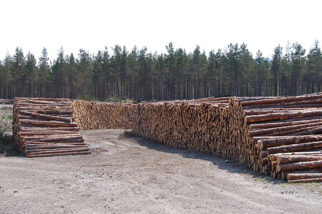 Log stacks at Little Garve