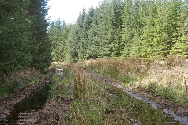 Forest Track in Coille Ghlinne Bhig