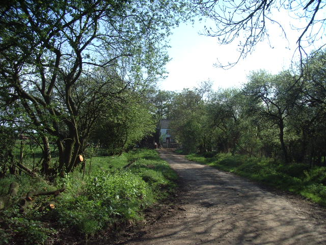 The road leading to Pringle House