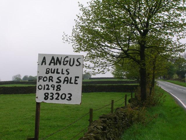 Unusual 'For Sale' Notice