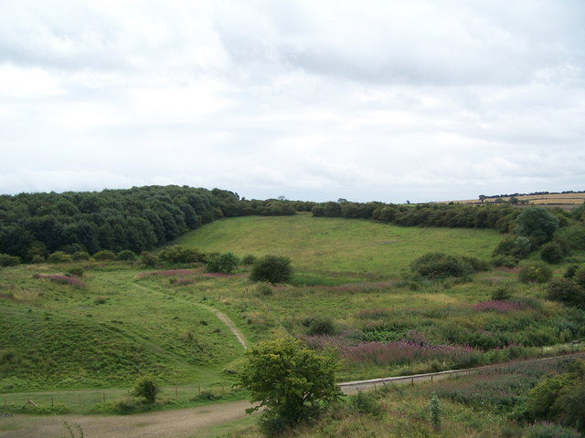 Wingate Quarry Local Nature Reserve