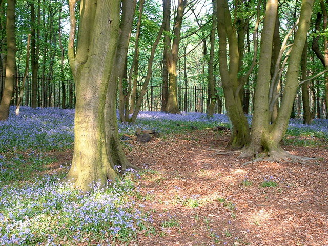 Woods next to Lower Rivington Reservoir