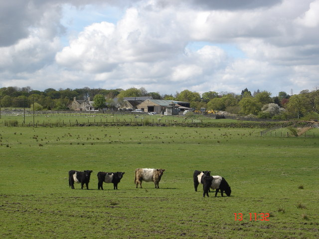 Balmuir Farm with Pedigree Belted Galloway herd in foreground