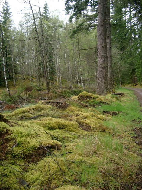 Moss and trees on the low road to Plodda falls