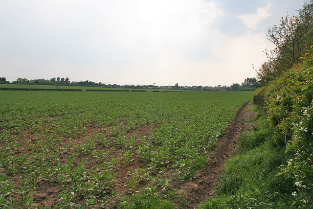 Farmland by Leicester Lane