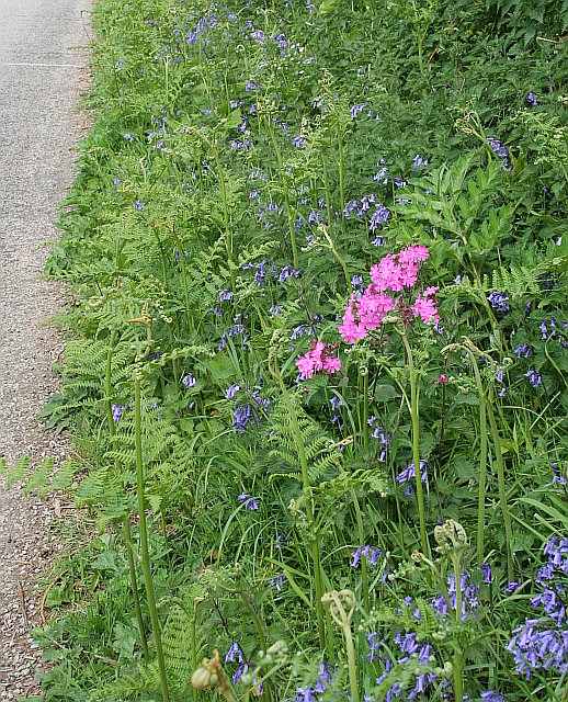 Roadside Verge