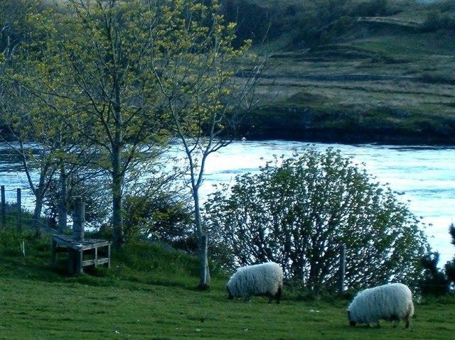 Sheep and a three-way stile