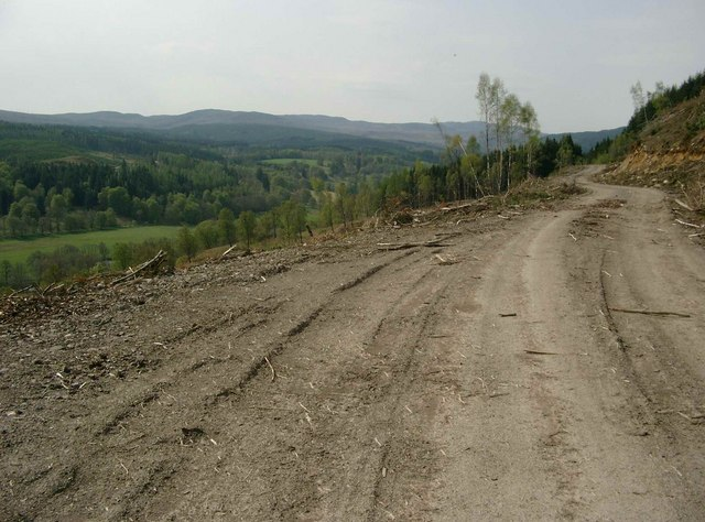Forestry track after felling operations.