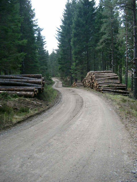 Logging at Guisachan