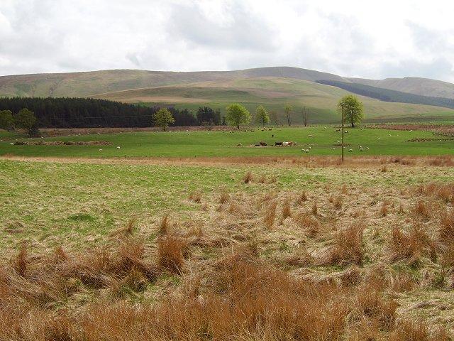 Cattle below Dundreich