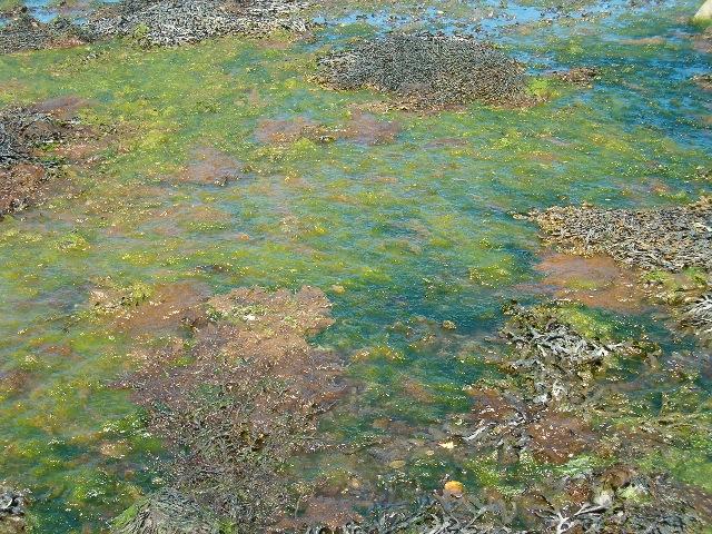 The colours of algae